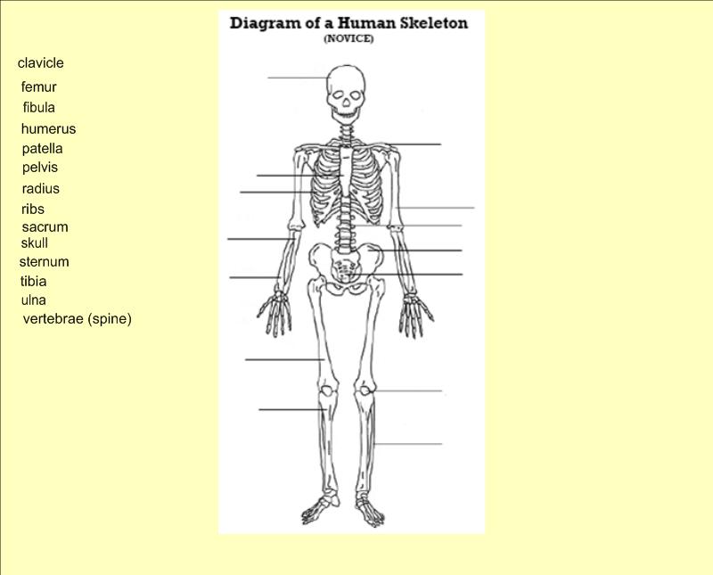 bone diagram quiz - 28 images - label the appendicular ...